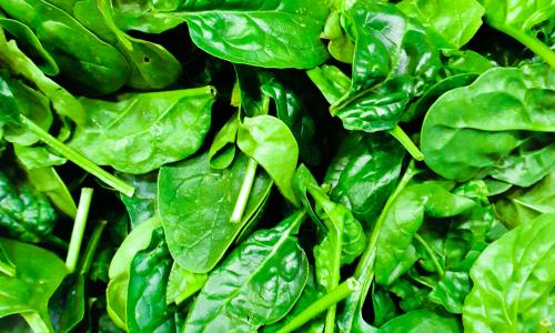 A very saturated and bright image of spinach leaves.